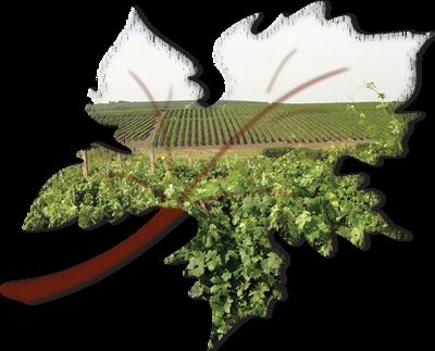 Colour WineWorld Kft. - borkóstolók, borvacsorák szervezése, borkereskedés